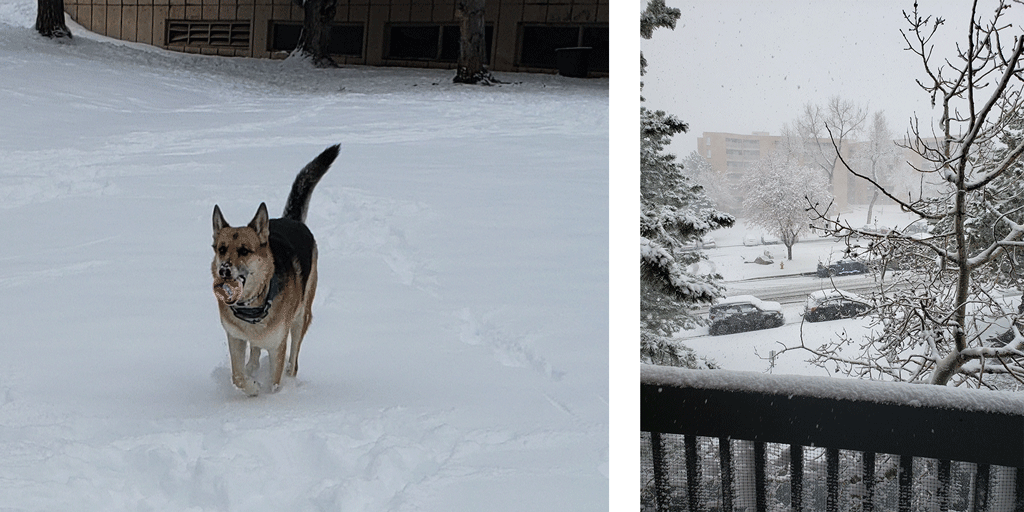 Dog playing ball in the snow, Colorado