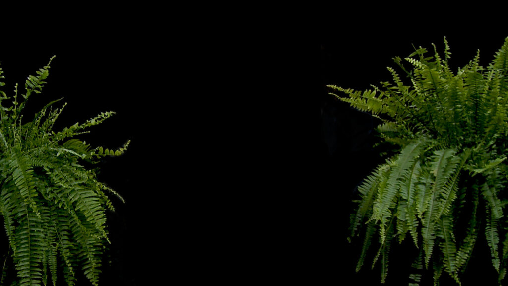 between two ferns zoom background